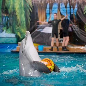 Дельфинарии, океанариумы Ильского