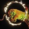 Цирки в Ильском