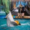 Дельфинарии, океанариумы в Ильском