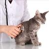 Ветеринарные клиники в Ильском